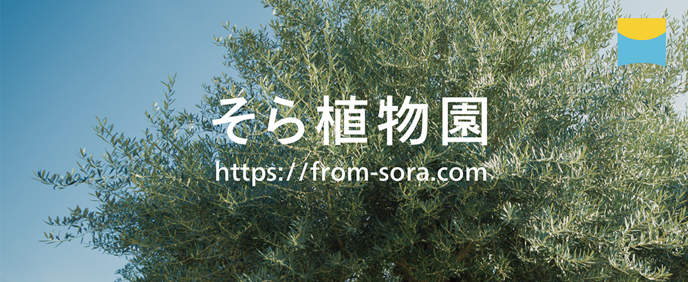 sora_HP