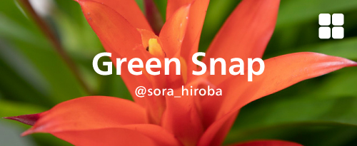 Green Snap