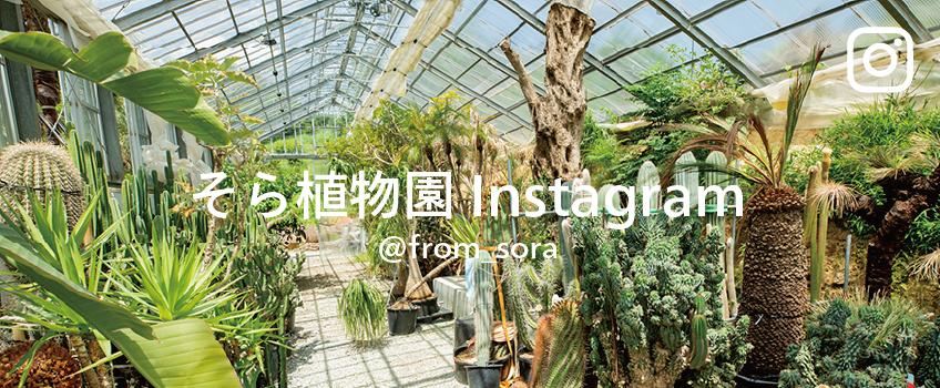 そら植物園 Instagram