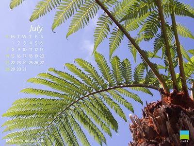 【PC用カレンダー壁紙】Dicksonia antarctica【7月】