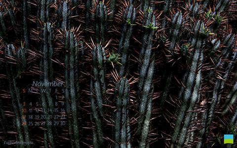 【PC用カレンダー壁紙】Euphorbia enopla【11月】