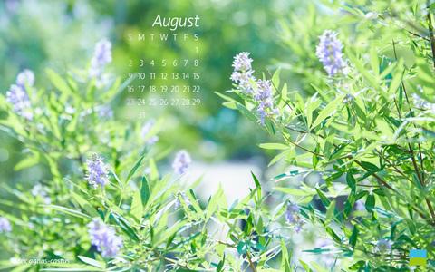 【PC用カレンダー壁紙 Wuxga】Vitex agnus-castus/セイヨウニンジンボク【8月】