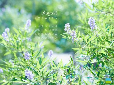 【PC用カレンダー壁紙 uxga】Vitex agnus-castus/セイヨウニンジンボク【8月】