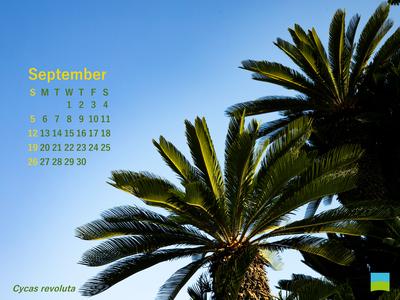 【PC用カレンダー壁紙】Cycas revoluta【9月】
